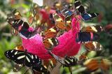 Mindo Butterfly Farm thumbnail