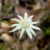 Nice furry daisy looking flower perched on a thin stalk