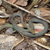 A small green snake hanging around on the trail - fairly docile